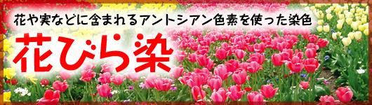 花や実などに含まれるアントシアン色素を使った染色 花びら染